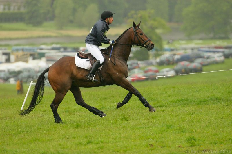 related pictures running horse - photo #32
