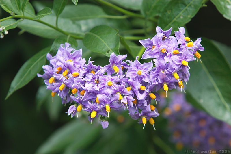 Photo: purple and yellow flowers